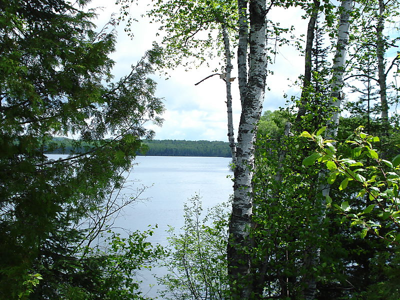 J lake and birch trees