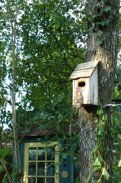 Ai birdhouse