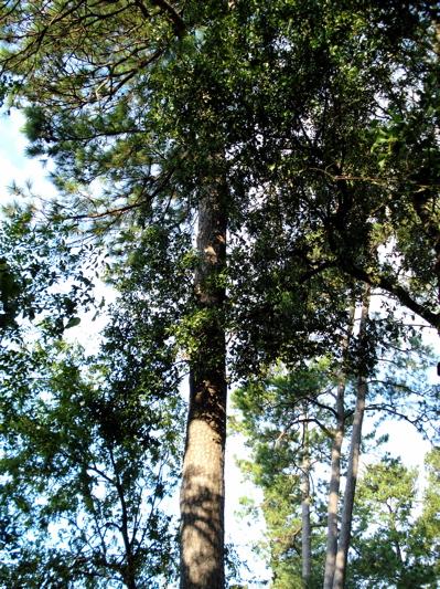 Ai trees