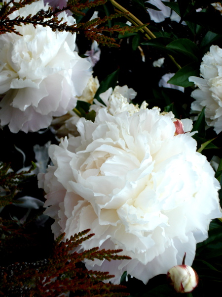 B flowers