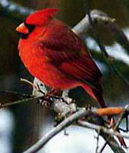 G1 cardinal